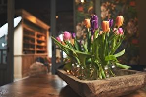 Het voorjaar